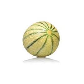 Melon (gros calibre)