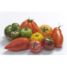 Les tomates saveurs d'antan (les 500grs)